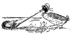 Edward Lear's illustration from 'The Dolomphious Duck', showing a runcible spoon