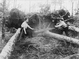 Two men sawing a fallen tree with a two-handled saw